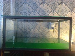 Выращивание хлореллы в домашних условиях в банке 68